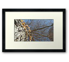 Blue Skies 010 Framed Print