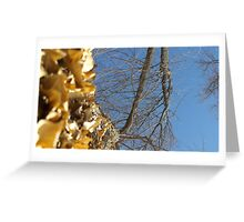 Blue Skies 011 Greeting Card