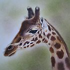 Study of a Giraffe by Philip Holley