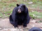 Black Bear by Johnny Furlotte