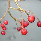 Winter Berries by crackgerbal