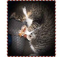 Bootsie And Her Christmas Toy Photographic Print