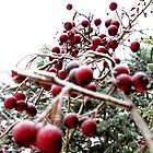 Winter berry tree by crackgerbal