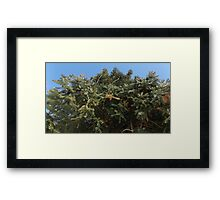 Blue Skies 016 Framed Print