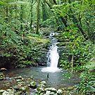 Rainforest Stream, Lamington National Park, Queensland, Australia by Adrian Paul