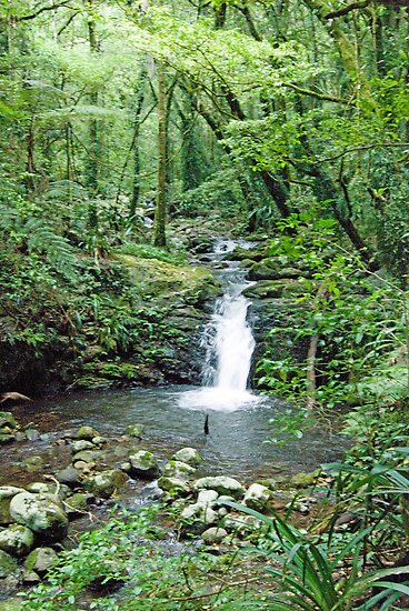 Rainforest Stream, Lamington National Park, Queensland, Australia by Adrian Paul