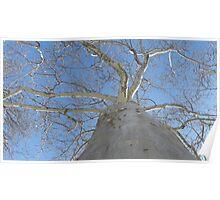 Blue Skies 020 Poster
