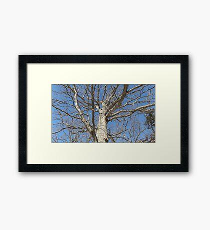 Blue Skies 022 Framed Print