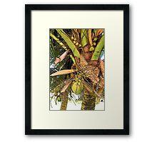 Coconut flavor Framed Print