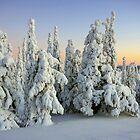 Snowy Trees by Päivi  Valkonen