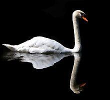 Swan by Evert Lancel