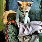 "Sad kitty by "" RiSH """