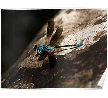 Dragonfly - Crystal Cascades - Cairns - Queensland - Australia Poster