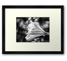 Hibiscus Unfolding BW Framed Print
