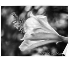 Hibiscus Unfolding BW Poster