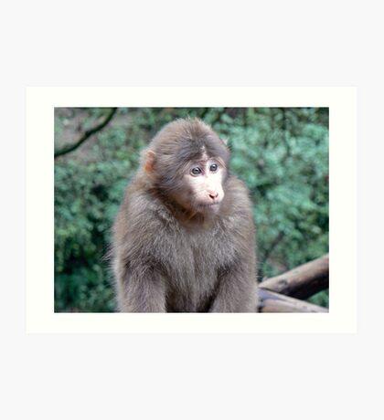 Monkey on Emei Shan, China Art Print