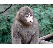 Monkey on Emei Shan, China Photographic Print