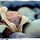 Caught Between a Rock ... by Kathleen Daley