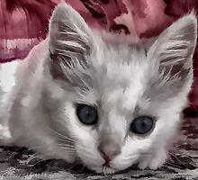 A Kitten Named Raiden by RDM-Margaux