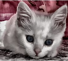 A Kitten Named Raiden Photographic Print