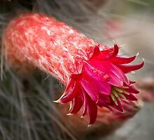 Prickly beauty by Celeste Mookherjee