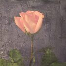 Winter Flower by izzybeth