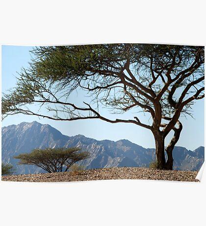 Desert trees, Fujairah, UAE Poster