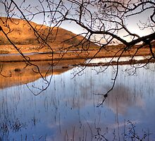 Killarney National Park - 'Watery Meadow' by Peter Sweeney