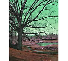 Asheville tree Photographic Print