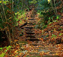 Rocky Path by Lisa Taylor