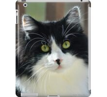 Male Tuxedo Maine Coon Cat | Middle Island, New York  iPad Case/Skin