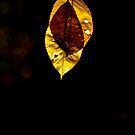 Golden Leaf by Isard