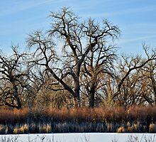 Cherry Creek Winter Study 2  by Robert Meyers-Lussier