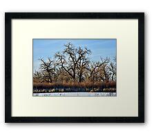 Cherry Creek Winter Study 2  Framed Print