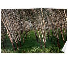 Dusk in the Rubber Trees Poster