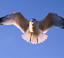 Glide by Donnie Shackleford