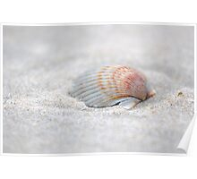 i got another seashell for you Poster