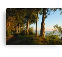 Beechtrees at the Baltic Sea Canvas Print