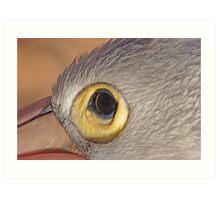 The Eye of the Pelican, Monkey Mia, Western Australia Art Print
