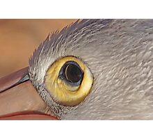 The Eye of the Pelican, Monkey Mia, Western Australia Photographic Print