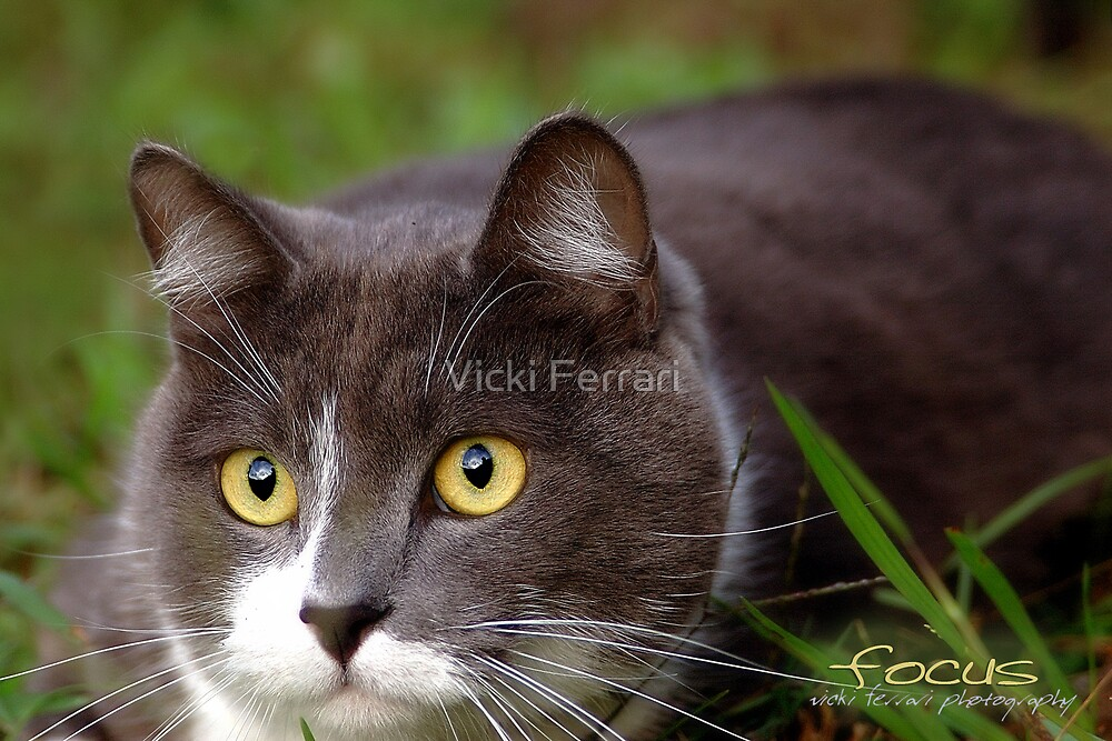 Focus © Vicki Ferrari Photography by Vicki Ferrari