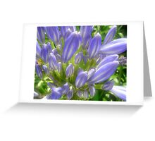 Soft Blues Greeting Card