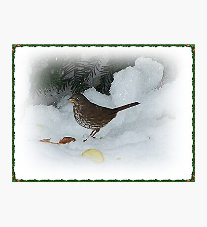 Bird Eating In The Snow Photographic Print