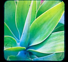 Agave  by Ross Jardine