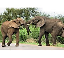 INTERACTION - THE AFRICAN ELEPHANT – Loxodonta Africana - Afrika Olifant Photographic Print