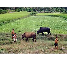 Cows and Kids Photographic Print