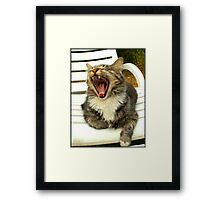 SAM the Maine Coon Cat Framed Print