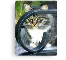 Sam the Maine Coon Cat Metal Print