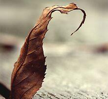 Picnic Table Leaf by Evert Lancel