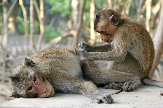 Monkey Island Pals by Daryl Davis